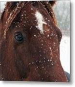 Brown Snow Horse Metal Print