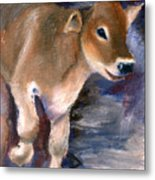 Brown Swiss Calf Aceo Metal Print