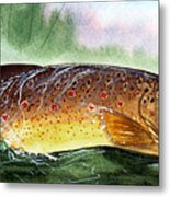 Brown Trout Taking A Fly Metal Print by Sean Seal