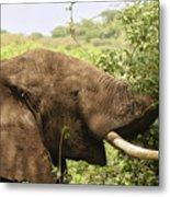 Browsing Elephant Metal Print
