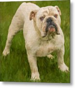 Bruce The Bulldog Metal Print