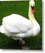 Bruges Swan 3 Metal Print