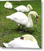 Bruges Swans 2 Metal Print