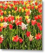 Brushed Tulips Metal Print