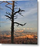 Bryce Canyon Dead Tree Sunset 3 Metal Print