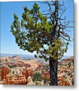 Bryce Canyon Fairyland Point Portrait Metal Print