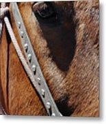 Bryce Canyon Horse Portrait Metal Print