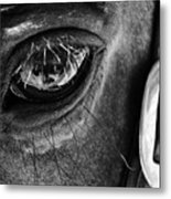 Bryce Canyon National Park Horse Bw Metal Print