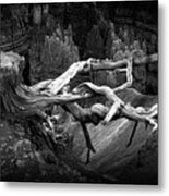Bryce Canyon Tree Stump On A Ridge Metal Print