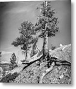 Bryce Canyon Treescape Metal Print