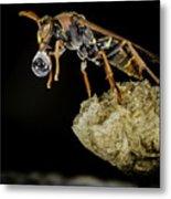 Bubble Blowing Wasp Metal Print
