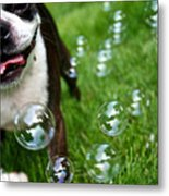 Bubble Busting Metal Print