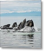Bubble-net Group With Mountains In Alaska Metal Print