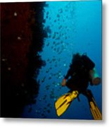 Bubbles And Butterfly Fish Metal Print