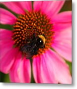 Bumble On A Pistil Metal Print