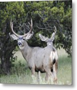 Buck And A Half Metal Print