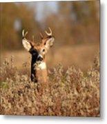 Buck In The Weeds Metal Print