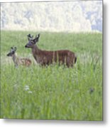Buck In Velvet Metal Print