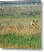 Buck Running In Field Metal Print