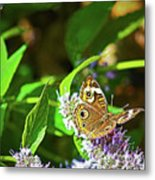 Buckeye Butterfly On The Move 1 Metal Print