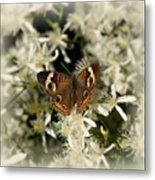 Buckeye On Wildflowers Metal Print