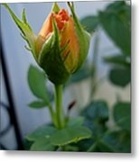 Bud Of A Rose Metal Print