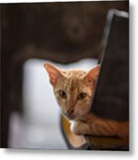 Buddhist Temple Cat Metal Print