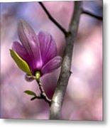 Budding Magnolia Metal Print
