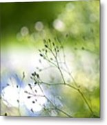 Budding Plant Metal Print
