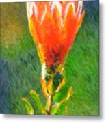 Budding Protea Metal Print