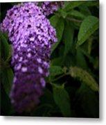 Buddleia Flower Metal Print