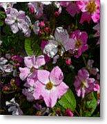 Buds And Petals- Pink Roses- Rose Bush- Floral Art Metal Print