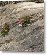 Buds Of Beauty Within Harshness Metal Print