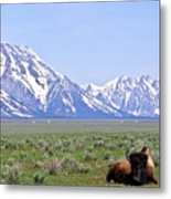 Buffalo At Rest Metal Print