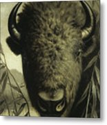 Buffalo Head Metal Print