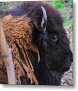 Buffalo Head Metal Print