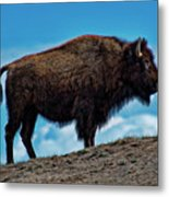 Buffalo In Profile Metal Print