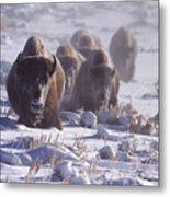 Buffalo In The Fog-signed-##6995 Metal Print