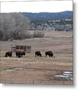 Buffalo New Mexico Metal Print