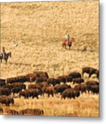 Buffalo Roundup Metal Print