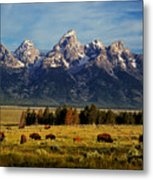 Buffalo Under Tetons 2 Metal Print