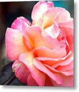 Buffum Rose Metal Print