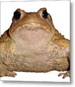 Bufo Bufo European Toad Isolated Metal Print