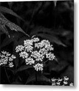 Bug On Flowers Black And White Metal Print