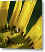 Bug On Yellow Sunflower Metal Print