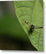 Bugeyed Fly Metal Print by Douglas Barnett