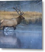 Bull Elk Crossing The Madison River Metal Print