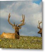 Bull Elk Friends For Now Metal Print