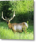 Bull Elk In Velvet  Metal Print by Jeff Swan