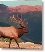 Bull Elk On Trail Ridge Road Metal Print